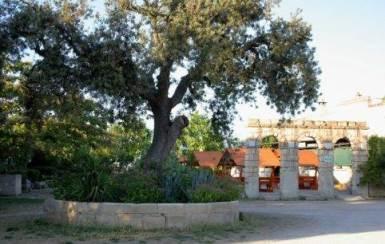Agriturismo dei Panzanari – Muro Leccese (LE) | Puglia Agriturismi