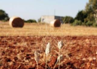 Agriturismo dei Panzanari