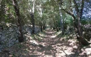Offerte Hotel Akropolis Taranto | Avventura e scoperta nel Bosco delle Pianelle