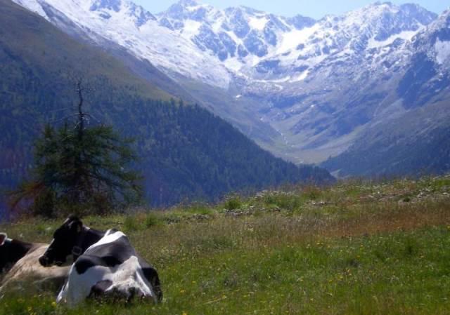 #EasyLoves   Vacanze in Valtellina
