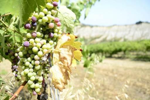 Hotel Akropolis Offer – Taranto | Wine tasting in the vineyards