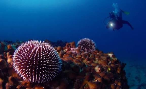 «Il Battesimo del Mare» Offer | Underwater experiences in Puglia