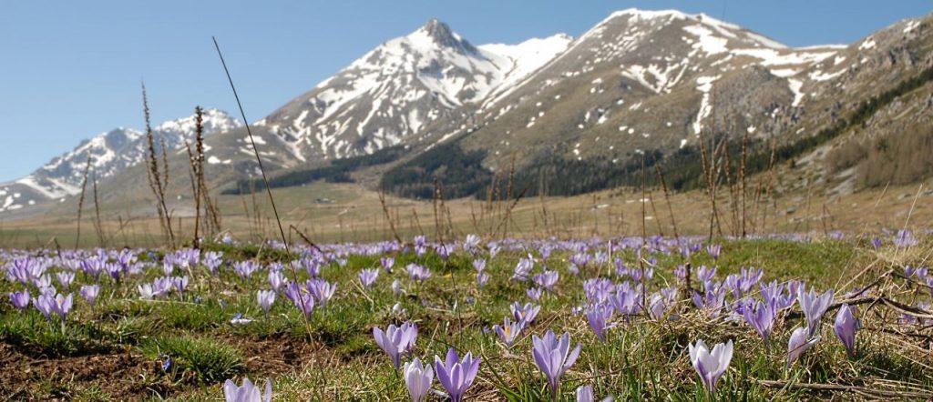 abruzzo turismo - Parco Nazionale d'Abruzzo