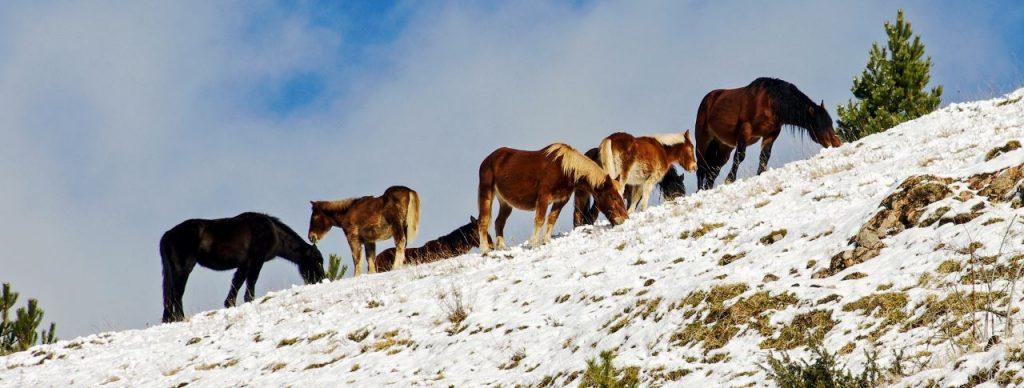 molise turismo - Parco nazionale degli Abruzzi