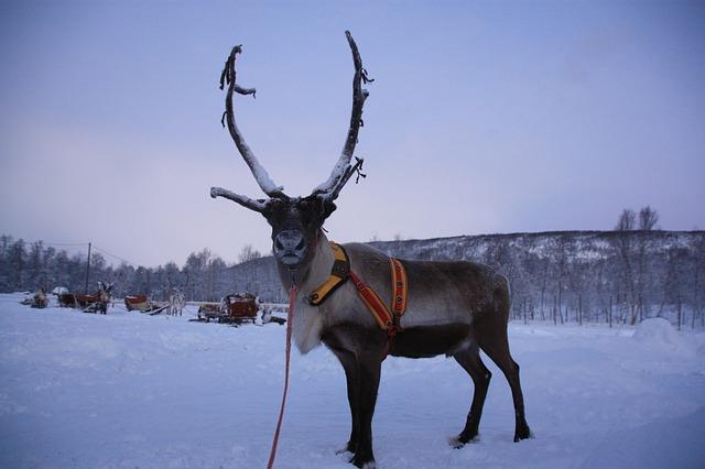 evasione d'inverno a rovaniemi